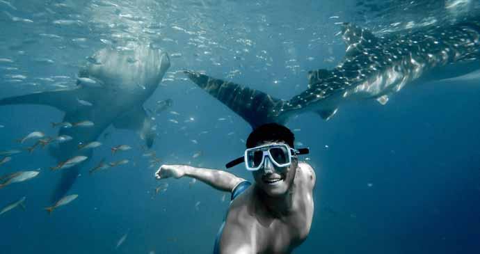Tiburón Ballena en Riviera Maya