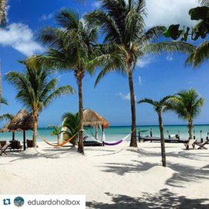 playa con palmeras en isla holbox