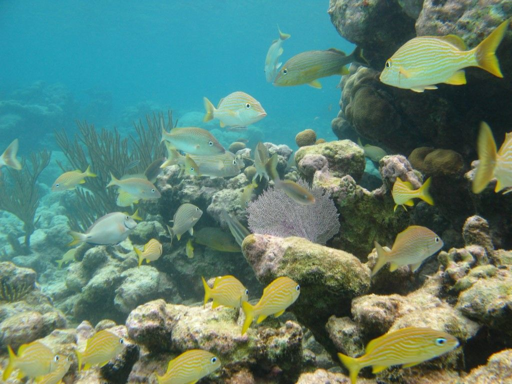 nado-con-tortugas-y-3-cenotes04
