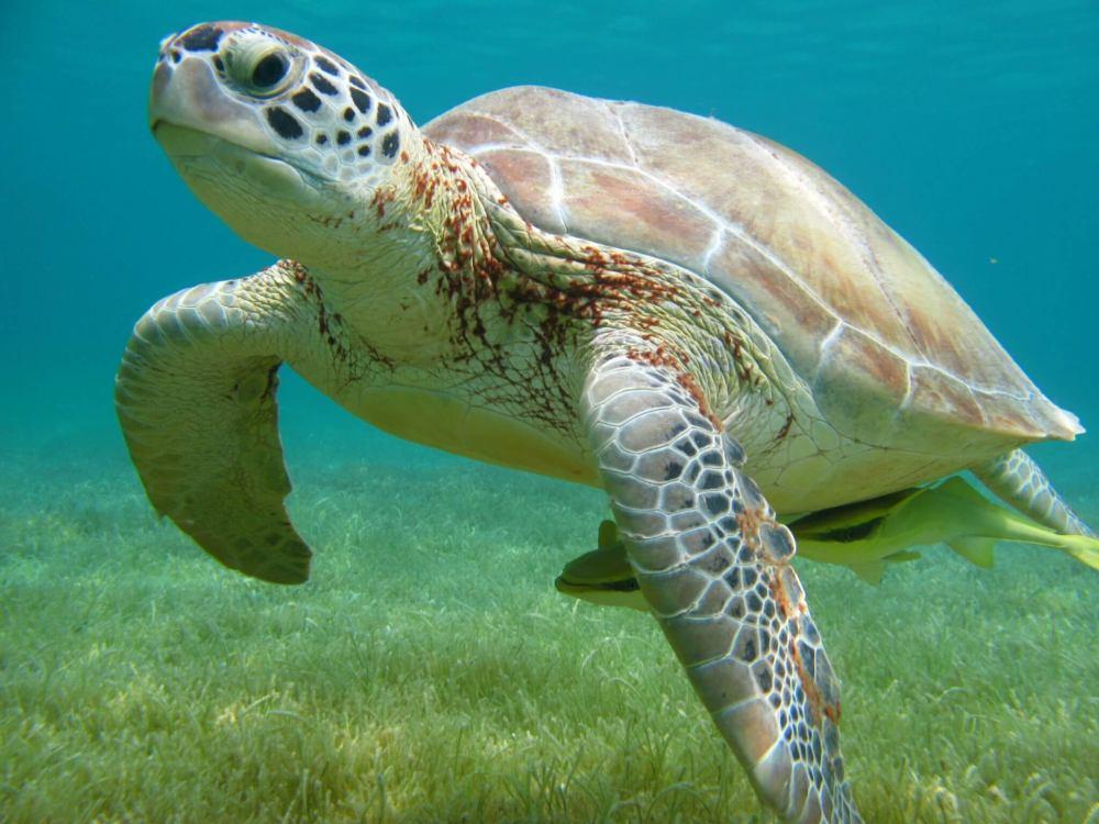 Tour: Nado con tortugas y 3 Cenotes.