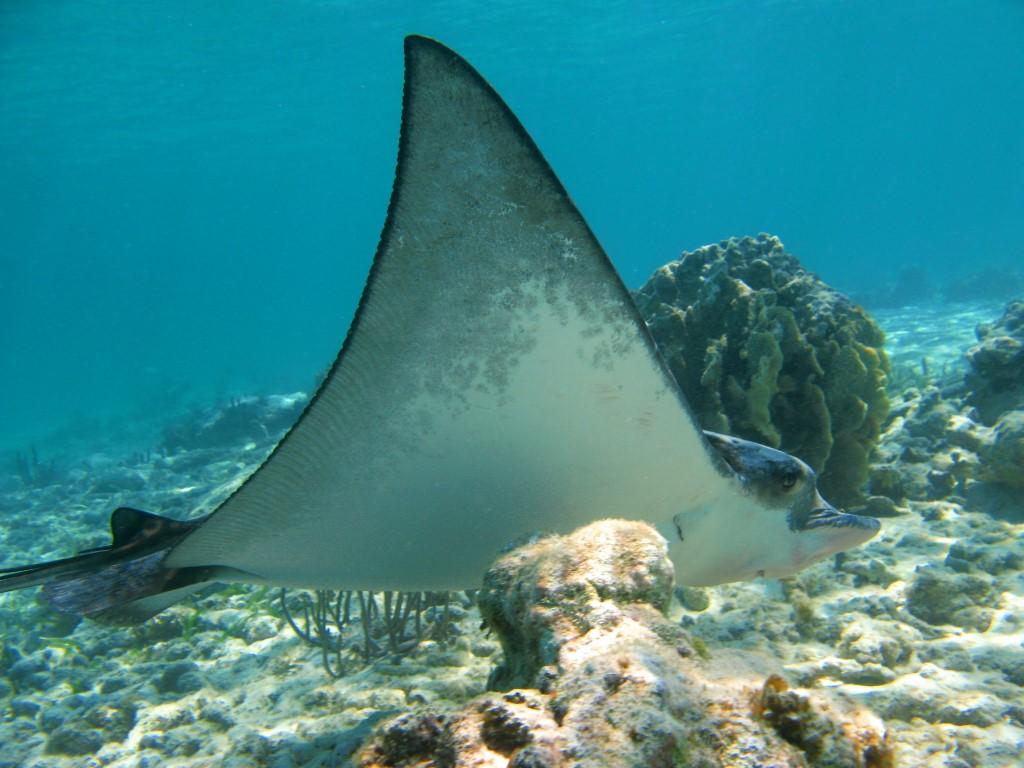 nado-con-tortugas-y-3-cenotes07