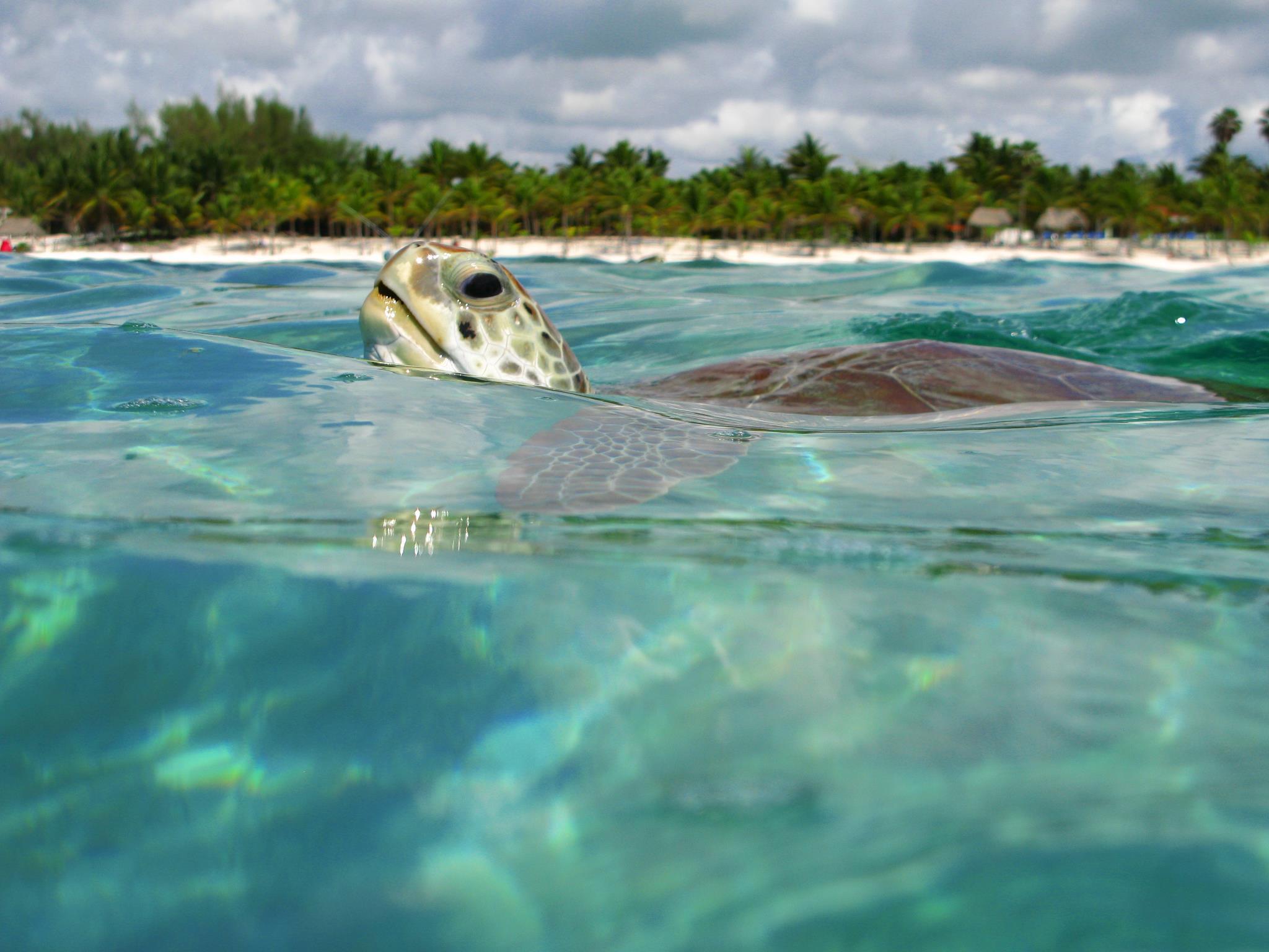 tulum-coba-tortugas-akumal02
