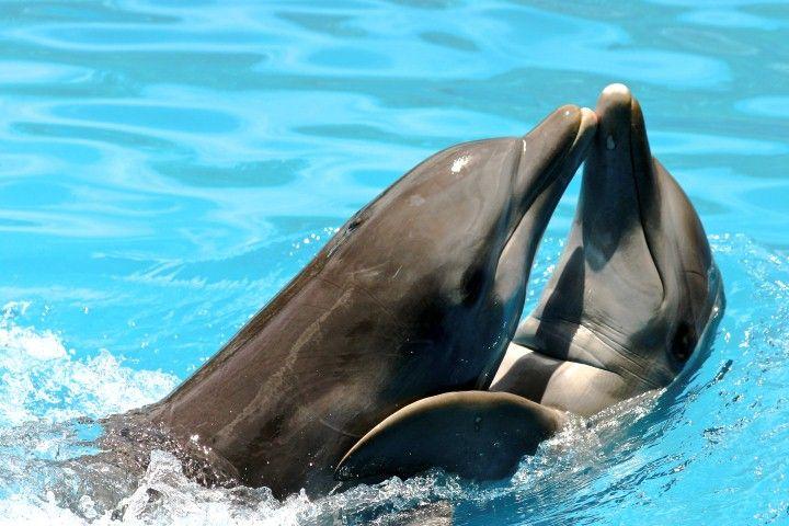 Nado con delfines.
