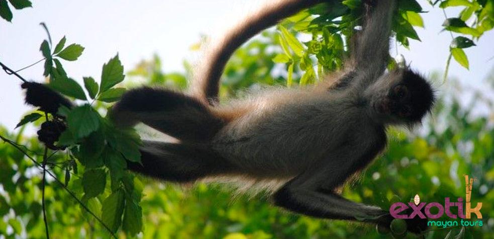 Mono mejores excursiones en Riviera Maya
