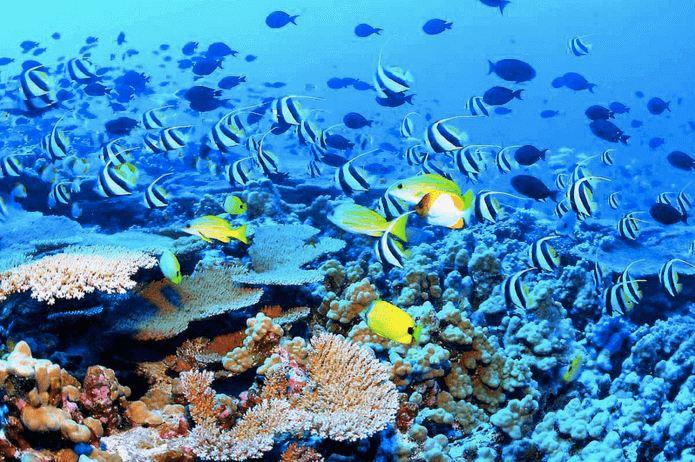 arrecife-coral-riviera-maya