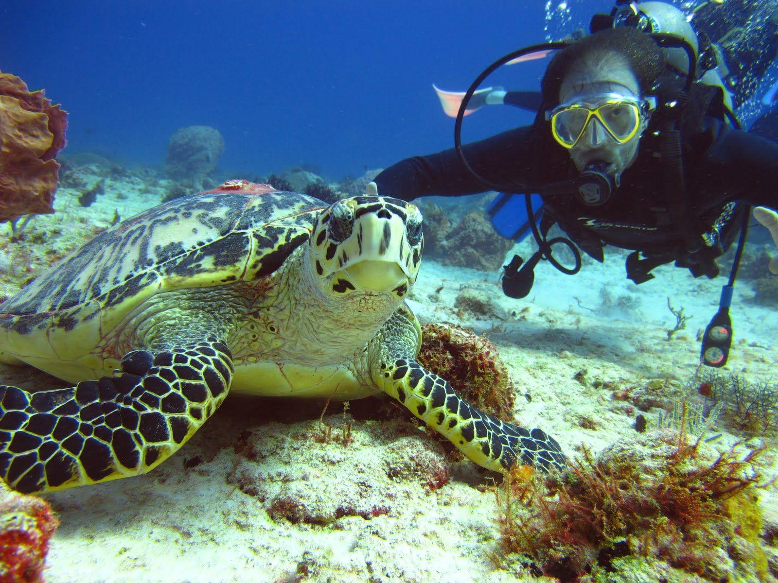 buceo-riviera-maya-tortugas
