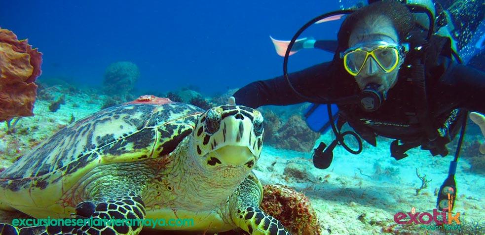 Nadar con tortugas en Riviera Maya