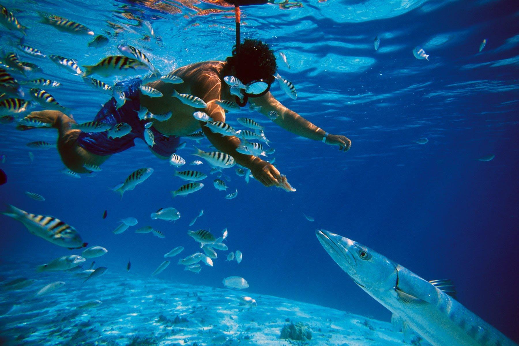 snorkel-cozumel