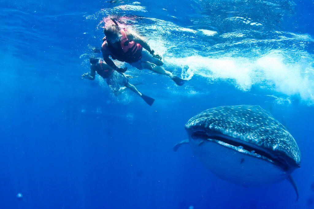 snorkel-tiburon-ballena-mexico