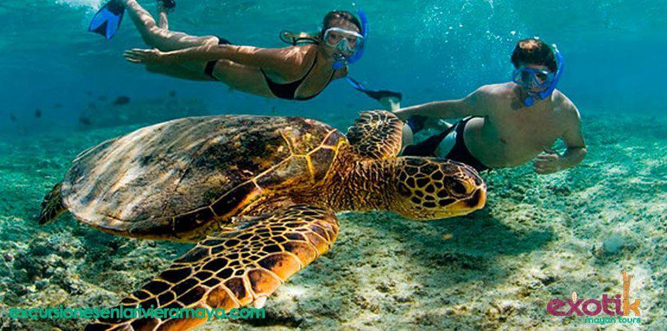 akumal-tortugas