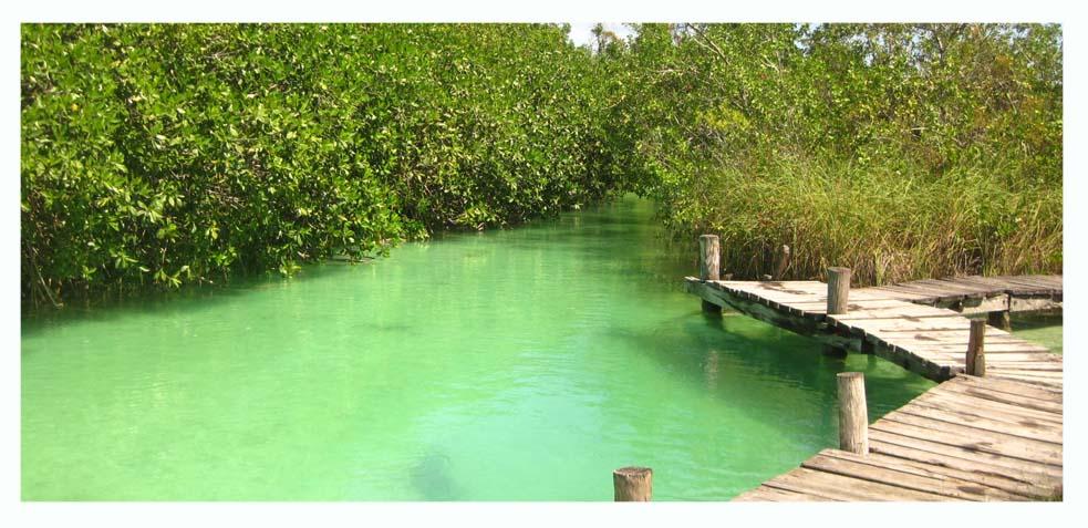 manglares de sian ka an