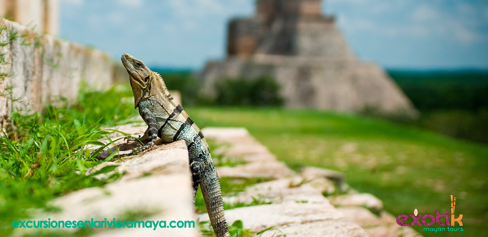 imprescindibles riviera maya