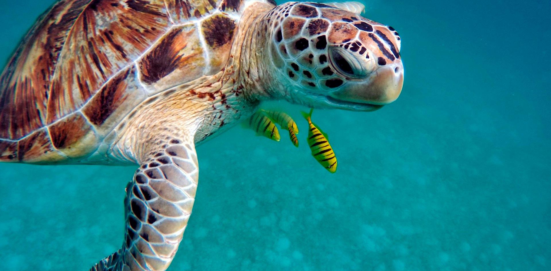 nado-con-tortugas