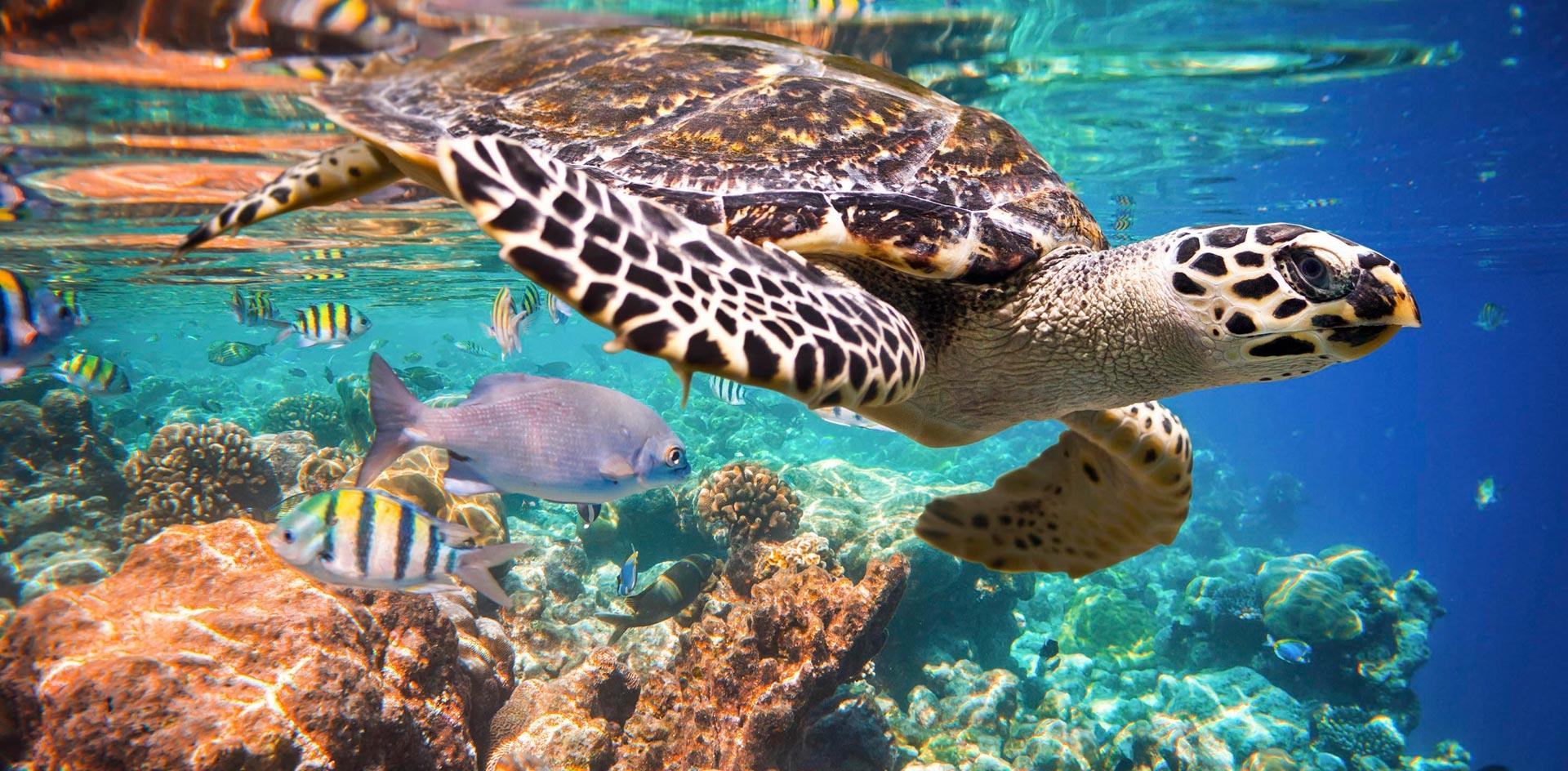 tolum-tortugas