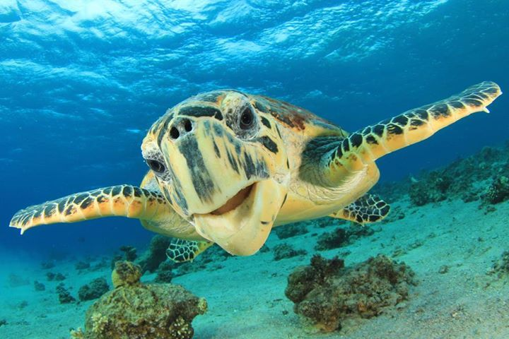 tulum-coba-tortugas-akumal