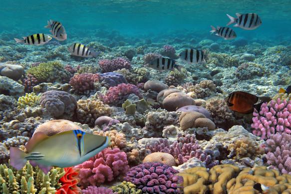 coral-reef-riviera-maya