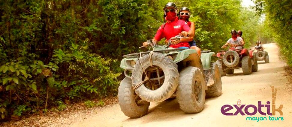 Otra de las actividades en Riviera Maya que puedes realizar, es conocer a fondo la flora y fauna del lugar.