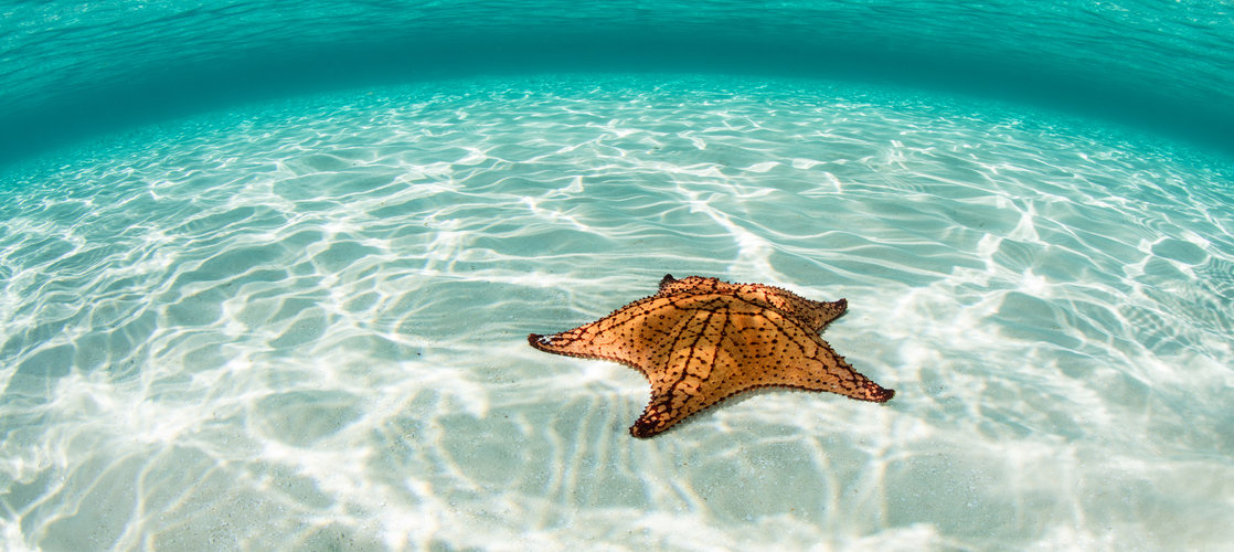 Caribbean Sea and West Indian Sea Star