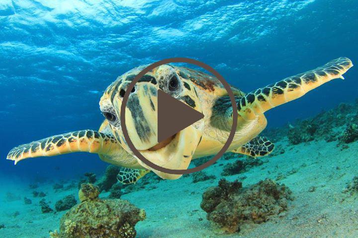 Vídeo nado con tortugas en Akumal